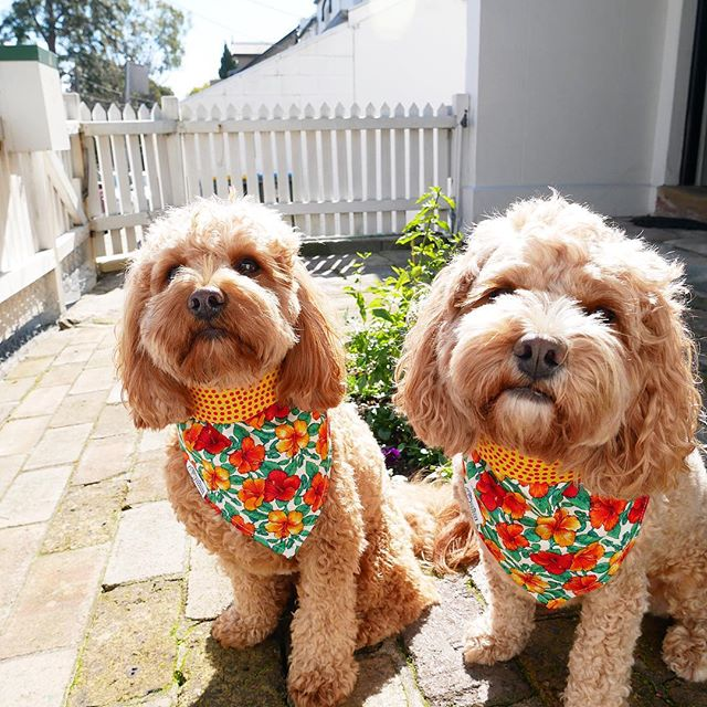 dogs wearing bandanas