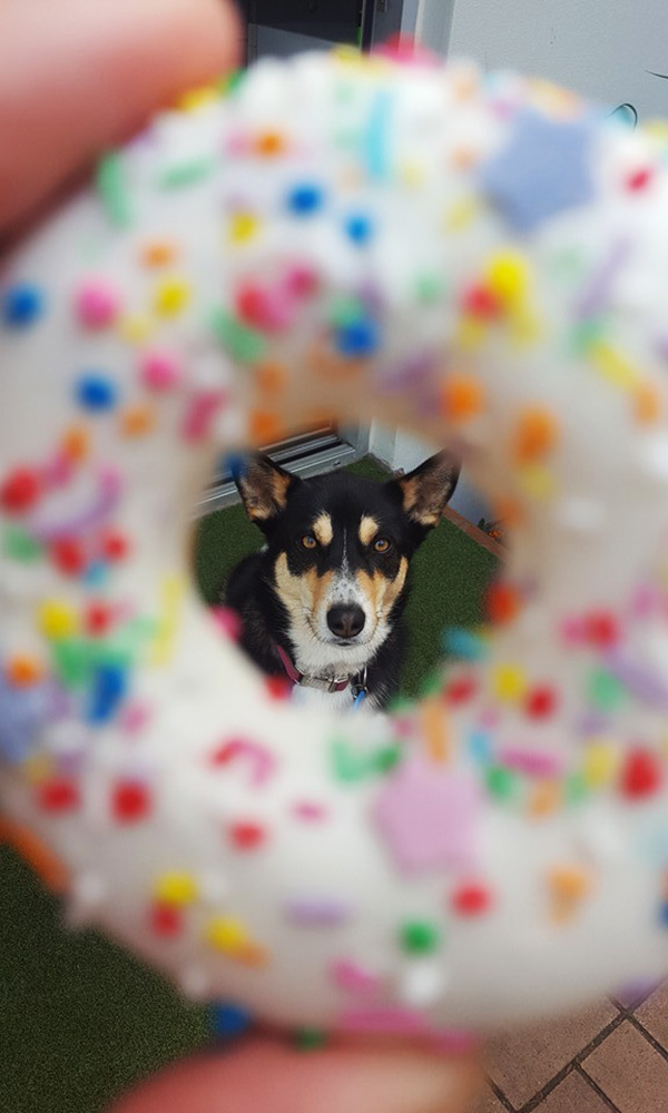 donuts for dogs | Huds and Toke